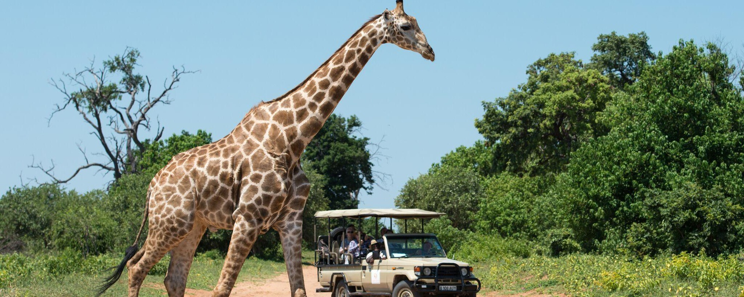 Safari Game drives at Chobe Water Villas