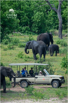 Elephants on safari
